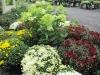 Mums & Limelight Hydrangea
