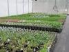 garden-center-greenhouse