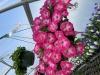 Petunia Hanger