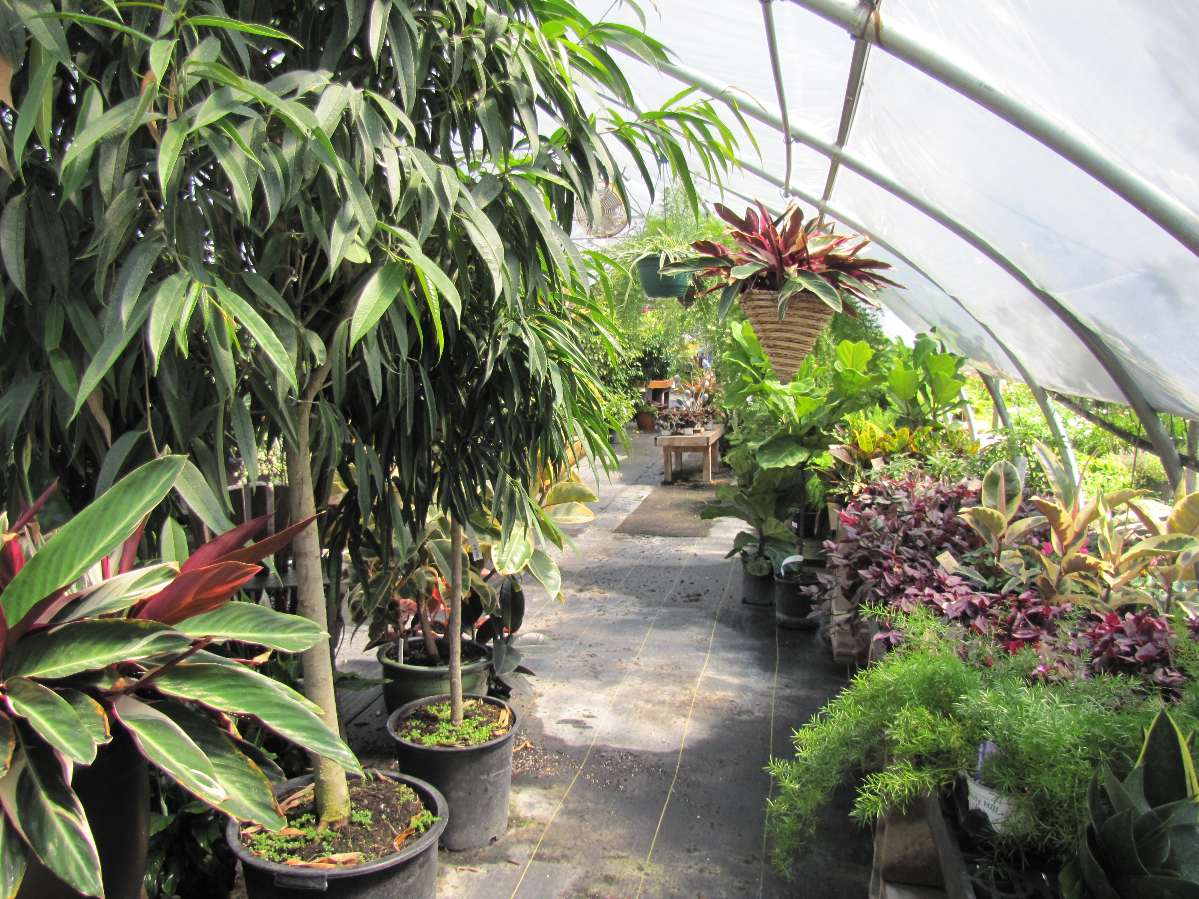 Houseplants - Shady Hill Greenhouses on floral greenhouse, botany greenhouse, snow greenhouse, outdoor greenhouse, bonsai greenhouse, gardening greenhouse, white greenhouse, horticulture greenhouse, conservatory greenhouse, tree greenhouse, green greenhouse, indoor greenhouse, vegetable greenhouse, plants greenhouse, spring greenhouse, weed greenhouse, tropical greenhouse, container greenhouse, nursery greenhouse, home greenhouse,