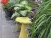 houseplants_0