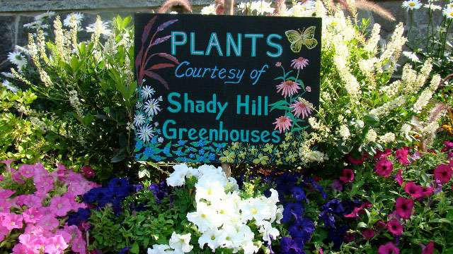plants-courtesy-of-shady-hill