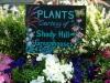 plants-courtesy-of-shady-hill