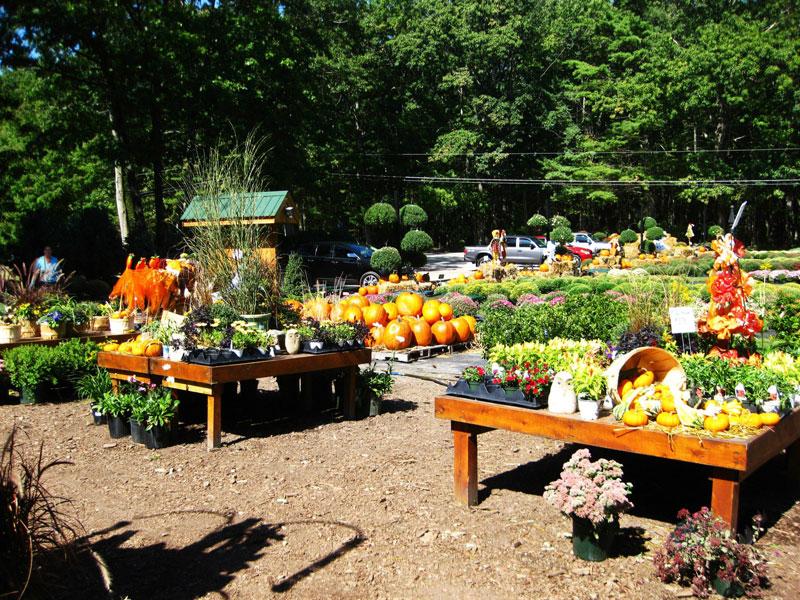 fall-display-mums-and-pumpkins
