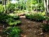 Perennial Shade Area