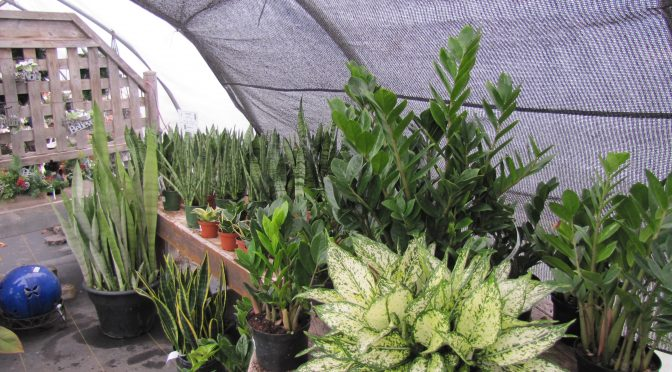 Houseplant Sale 30% Off
